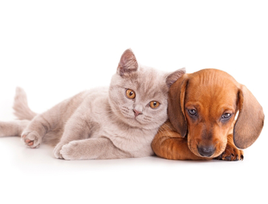 The comforting benefits of pets for therapy